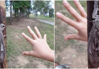 O molie de mărimea unei palme a fost descoperită de către o familie din Australia