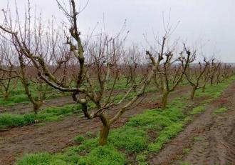 Valul de frig a afectat livezile de pomi fructiferi din mai multe zone din țară. Agricultorii fac tot posibilul să-și protejeze culturile