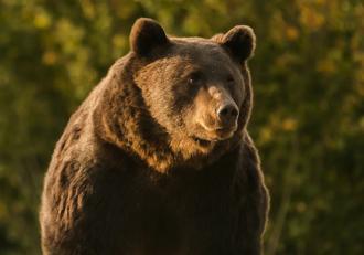 Moartea ursului Arthur de glonţul prinţului de Lichtenstein schimbă legea în România